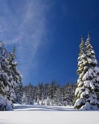 Schnee [(c) Verena Buchheim]